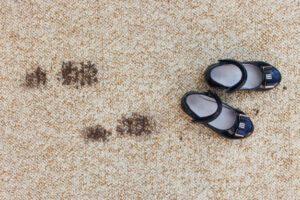 Carpet steam cleaning Auburn